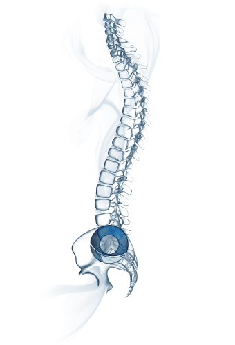 Bone Cements & Accessories for Spinal Surgery